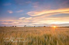 Ardoughter Ballyduff sunrise by Susan Browne Image C, Light Of Life, Busan, Life Images, Professional Photographer, Photographers, Ireland, Sunrise, Beautiful Places