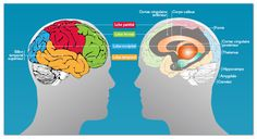 Un beau dossier sur la mémoire, son fonctionnement, ses troubles, avec une liste intéressante de liens Lobe Occipital, Science And Technology, Adolescents, Communication, Family Guy, Teaching, Point, Gauche, Nursing