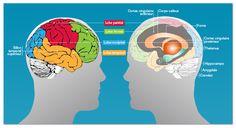 Un beau dossier sur la mémoire, son fonctionnement, ses troubles, avec une liste intéressante de liens