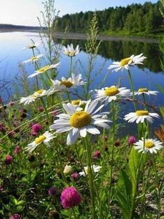 The photo – GDK – Join in the world of pin Beautiful World, Beautiful Places, Beautiful Pictures, Sunflowers And Daisies, Wild Flowers, June Flower, Daisy Love, All Nature, Nature Pictures