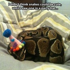 Top 30 Funny Animal Quotes and Pics #Humor Quotations