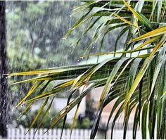 "Repost from Instagram ! #WeLike ! #Madinina by @ninakaribiyan ""Il pleut !!! it's rainning !! Lapli !!!"" http://ift.tt/1iLw8EM"