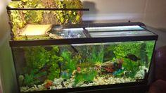 Turtle tank DIY basking area