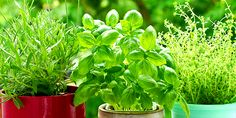 April 11th: Herb Gardening Class | New Earth Market