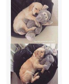 Ohhh I love Doggies!