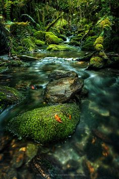 Rainforest by  Kongkrit Sukying on 500px.com