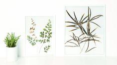Φυτολόγια σε κάδρο Merlin, Plants, Plant, Planets