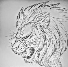 Big cat sketch by Madpattii on DeviantArt Cool Art Drawings, Pencil Art Drawings, Cool Sketches, Easy Drawings, Drawing Sketches, Lion Sketch, Cat Sketch, Big Cats Art, Cat Art