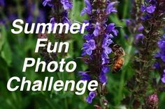 Weekly Friday photo challenge for the summer...who's in?