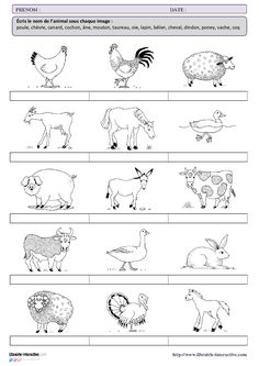 Basic French Words, How To Speak French, Learn French, French Language Lessons, French Language Learning, French Lessons, French Worksheets, 1st Grade Worksheets, Fun Facts About Animals