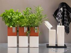 Source: A Kitchen Garden You Can Sprout on a Countertop