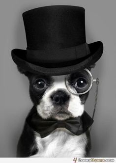 One very distinguished dog