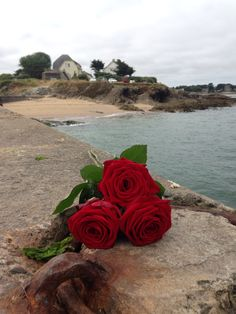 Roses mer plage