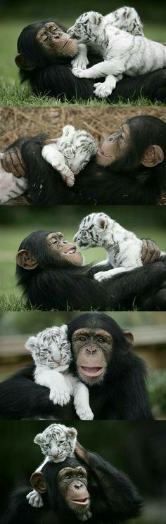 My friend says only the tiger is cute not the monkey ;)