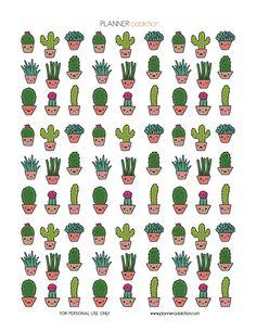 Kawaii Cactus More
