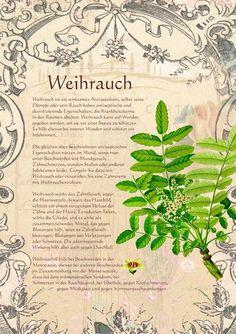 Weihrauch http://www.kraeuter-verzeichnis.de/