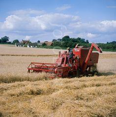 1960s Massey Ferguson combine harvester harvesting wheat. Historic photo taken in 1974