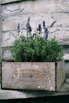 Potted Lavender in a Vintage Crate - this is a pretty way to display your potted plants - via Vintage Chic Lavender Blue, Lavender Fields, Lavander, Lavender Plants, French Lavender, Deco Champetre, Old Crates, Deco Nature, Decoration Plante