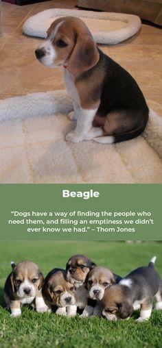 Beagle #beaglemania beagles art Beagle Dog Breed, Beagle Art, Beagle Puppy, Cute Little Puppies, Cute Dogs, Big Dogs, Small Dogs, Dogs And Puppies, Dog Information