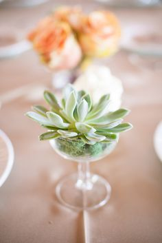 cup o' succulent  Photography by algawlikphotography.com, Floral Design by designbysage.com