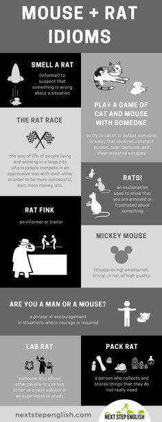 Mouse Rat Idioms: 9 Great Idioms with Meanings and Examples English Idioms, English Phrases, Learn English Words, English Grammar, Teaching English, Advanced English Vocabulary, English Vocabulary Words, Idioms And Meanings, English Language Learners