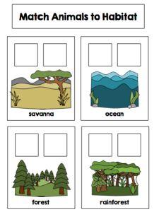 Science File Folder Activities by theautismhelper.com