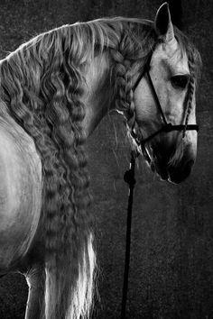 Runaway Gypsy - stunning horse