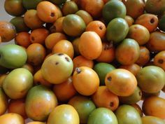 Yellow plums (from St.Vincent) taken by: Angela V.