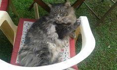 Cesare relax