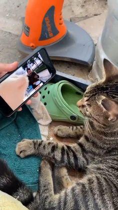 Funny Animal Jokes, Funny Cute Cats, Cute Kittens, Funny Animal Videos, Funny Animal Pictures, Cute Funny Animals, Animal Memes, Cats And Kittens, Photo Animaliere