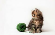 Exclusive Interview: Photographer of World's Cutest Kitten - My Modern Metropolis
