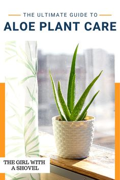 Learn how to keep your aloe plant alive before it's too late! Check out these aloe plant care tips to know exactly what you need to do to keep it happy and thriving! Aloe Plant Care, Apartment Plants, Best Indoor Plants, Low Lights, Houseplants, Apartments, Happy, Tips, Check