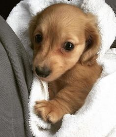 Kidney disease in dogs will have a certain variety of symptoms and your dog may experience all of them or simply a few of the symptoms. Puppy Care, Pet Puppy, Dog Cat, Cute Puppies, Dogs And Puppies, Cute Dogs, Doggies, Cute Baby Animals, Animals And Pets