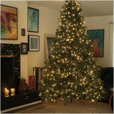 85 Ft Prelit Artificial Tree 600 Dual Color Leds Switch Between Warm White And Multicolor Steadyon Fading Or Flashing Red Berries Pine Cones Frosted Tips