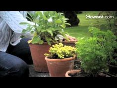 How to Keep Fresh Herbs Alive over the Winter - YouTube