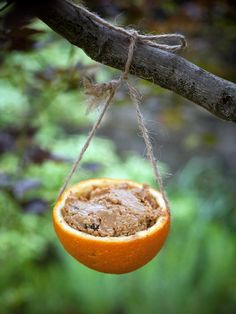 Birdfeeders made from orange rind, peanut butter/cornmeal/oats/seeds/fruit