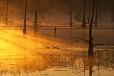 Never seen the swamps like this, that I can recall, but this state has some neat places! Scenery Pictures, Great Pictures, Cool Photos, Beautiful Pictures, Interesting Photos, Beautiful World, Beautiful Places, Louisiana Bayou, Down South