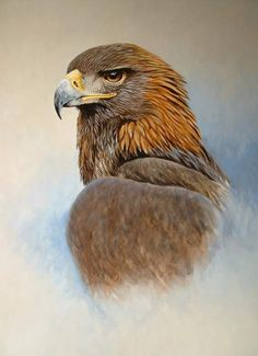 Golden Eagle by Colin Chandler via artistsandillustrators.co.uk