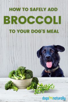 Broccoli is actually one of the most nutrient-packed veggies you can give your dog. Here are 10 reasons why ... 🥦Prevents Oxidative Stress 🥦Helps Prevent Cancer 🥦Reduces Inflammation 🥦Balances The Microbiome 🥦Helps Manage Leaky Gut 🥦Detoxes The Liver 🥦Improves Eye Health: 🥦Brain Health 🥦Anxiety And Depression 🥦Reduces Risk Of Zinc Deficiency If you'd like to try putting this super-veggie in your dog's bowl … Here's everything you need to know BEFORE you give broccoli to your dog.
