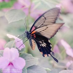 Butterfly fluttering through a lilac dream Purple | Dreamy  Copyright Lizemijn Libgott  https://instagram.com/lizemijn