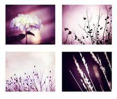 Botanical Printing Plate Set - Google Search