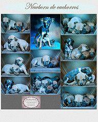 NewborndecachorrosFamilia/lenalima, fotografa  de animais em Belo Horizonte