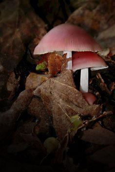 "/ Photo ""Mushrooms"" by Hugo (Hughes) Bussen Beautiful World, Beautiful Images, Dame Nature, Slime Mould, Mushroom Fungi, Mushroom Art, Rose Cottage, Pink Brown, Science Nature"