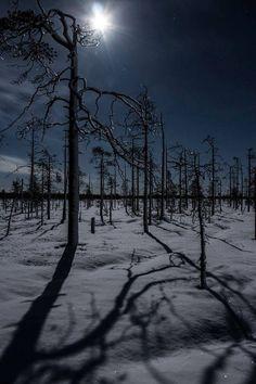 Ranua,Finland by Sami Takarautio Winter Szenen, Winter Magic, Winter Night, Winter Time, Snow At Night, Beautiful World, Beautiful Places, Night Photos, Winter Beauty