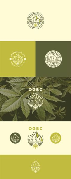 Logo design by bcostudios for OGBC, an all natural recreational cannabis product #weed #branding #lineart