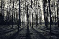 Shadows by Jordi sureda