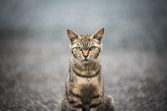 https://flic.kr/p/oQBX2G | cat