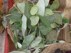 Peru: tingimento                                                                                                                                                      Mais Tinta Natural, Slow Fashion, Plant Leaves, Nature, Stamping, Natural Colors, Dyes, Leaves, Craft