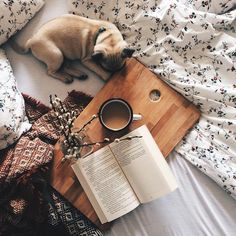 Reading and coffee while snuggling your pug in bed.