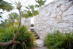 Love this wall! Love Fiona Brockhoff Designs gardens